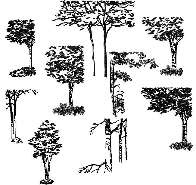 Cad Tree Symbol
