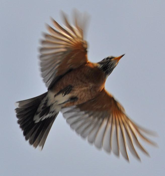 eva u0026 39 s 2011 ma bird photo list