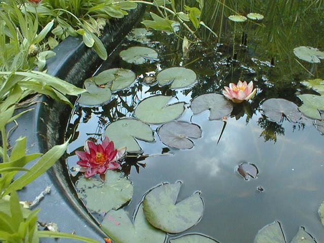 Simple Water Gardens